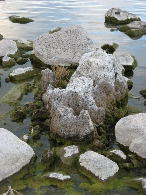 Tufa (carbonate) at Walker Lake