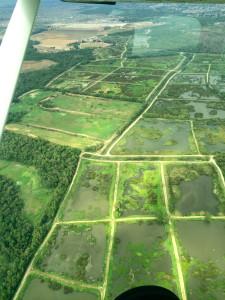 AJO marshland